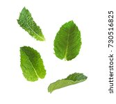 mint leaves on a white... | Shutterstock .eps vector #730516825