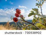 small twig with rose hips on... | Shutterstock . vector #730538902