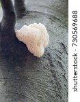 rare lion's mane mushroom ... | Shutterstock . vector #730569688