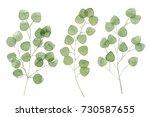 a set of watercolor eucalyptus... | Shutterstock . vector #730587655