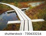 big swamp wetlands kemeri... | Shutterstock . vector #730633216