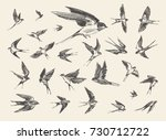 Stock vector a flock of birds flying swallows hand drawn vector illustration sketch 730712722