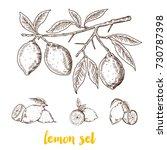 lemon set. hand drawn vintage... | Shutterstock .eps vector #730787398