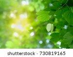 closeup nature view of green... | Shutterstock . vector #730819165