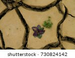 abstract texture of dry clay on ... | Shutterstock . vector #730824142