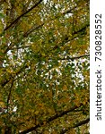 tree with autumn leaves toned... | Shutterstock . vector #730828552