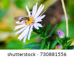 insects  arthropods  macro. a... | Shutterstock . vector #730881556