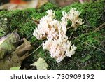 Coral Fungus On Tree With Green ...