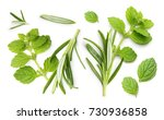 rosemary twig and mint isolated ... | Shutterstock . vector #730936858