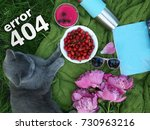 Small photo of error 404 page, A lovely summer picnic on the green herbage by a pet. A picnic on a blue cloth laid, A cherry cup, a gray British cat, glasses and a magazine with copyspace