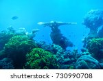the beauty of the underwater... | Shutterstock . vector #730990708