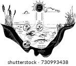 freshwater lake ecosystem   Shutterstock .eps vector #730993438