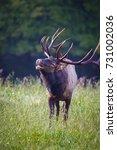 male elk calling for his... | Shutterstock . vector #731002036