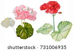 Set Of Two Geraniums  Watercolor