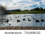 ducks in pond. | Shutterstock . vector #731008132