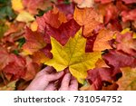 Autumn. Female Hands Hold...