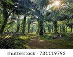 morning sunlight passing... | Shutterstock . vector #731119792