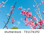 cherry blossom branch against... | Shutterstock . vector #731176192