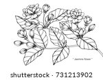 hand drawing sketch jasmine... | Shutterstock .eps vector #731213902