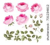 vintage flowers set overwhite... | Shutterstock .eps vector #731234812