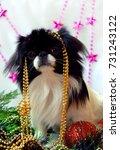 dog  japanese chin on christmas ... | Shutterstock . vector #731243122