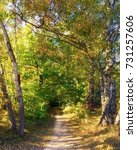 path in sunny autumn forest | Shutterstock . vector #731257606