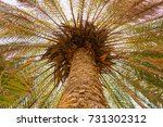 Palm Tree Trunk Close Up With...