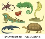 Reptile and amphibian colorful fauna vector illustration reptiloid predator reptiles animals.