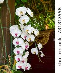white orchid   Shutterstock . vector #731318998