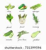 fresh vegetable green set with...   Shutterstock .eps vector #731399596