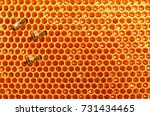 Bee Honeycombs With Honey And...