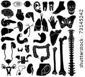 internal organs  vector... | Shutterstock .eps vector #73145242