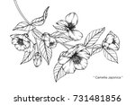 hand drawing and sketch... | Shutterstock .eps vector #731481856