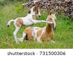 Pony Foal Kicks Its Mother Wit...