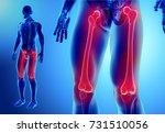 3d illustration of femur   part ... | Shutterstock . vector #731510056