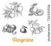 tangerine  mandarin set  vector ... | Shutterstock .eps vector #731535526