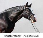 Shire Horses Are Prepared For...