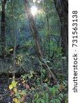 sunlight beam trickling down on ... | Shutterstock . vector #731563138