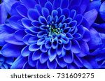 Blue Flower Background   Close...