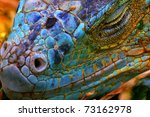 Amazing Iguana Specimen...
