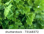 macro view of fresh green...   Shutterstock . vector #73168372