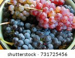 red and white grapes | Shutterstock . vector #731725456