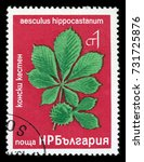 """Small photo of BULGARIA - CIRCA 1976: A Stamp printed in BULGARIA shows image of a Horse-chestnut with the description """"Aesculus Hippocastanum"""", """"Tree and shrub flowers"""" series, circa 1976"""