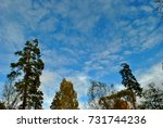 autumn nature | Shutterstock . vector #731744236