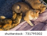 three cats laying on a  blanket. | Shutterstock . vector #731795302