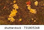 Fallen Autumn Maple Leaves...