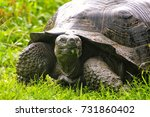galapagos giant tortoise ... | Shutterstock . vector #731860402