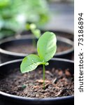 Young plant with water on it - stock photo