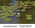 Small photo of Lily Pads on a Missing Link Lake in the Boundary Waters in Minnesota