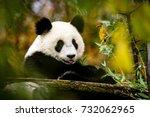 Happy Panda Putting His Tongue...